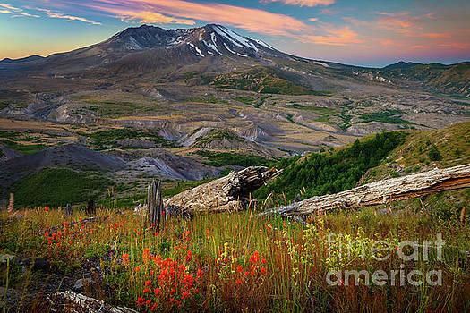 Inge Johnsson - Mount St Helens Paintbrush