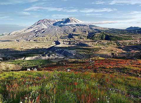 Mount St Helens Wildflowers by Wes and Dotty Weber