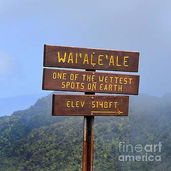 Mount Waialeale Sign in Kauai by Catherine Sherman