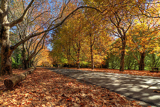 Mount Wilson The Glorious Colours of Autumn NSW Australia by David Iori