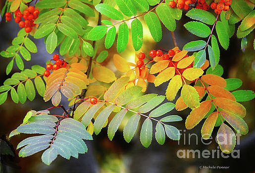 Mountain Ash Fall Color by Michele Penner