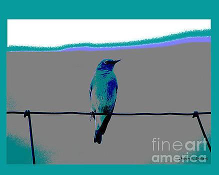 Mountain Blue Bird by Sharon K Shubert
