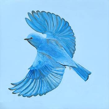 Mountain Bluebird in Flight by Anne Hockenberry