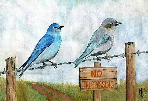 Mountain Bluebird by Marsha Friedman