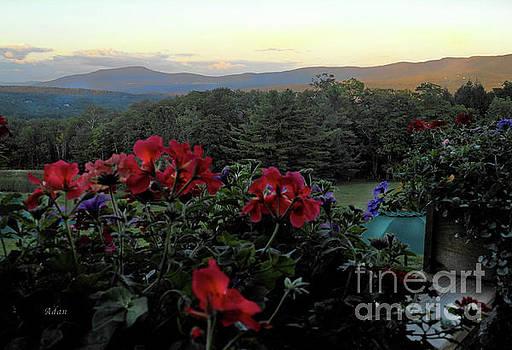 Felipe Adan Lerma - Mountain Flowers #1