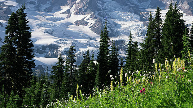 Mountain Flowers by Scott Nelson