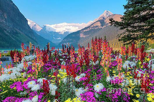 Mountain Garden Lake Louise by Michael Wheatley