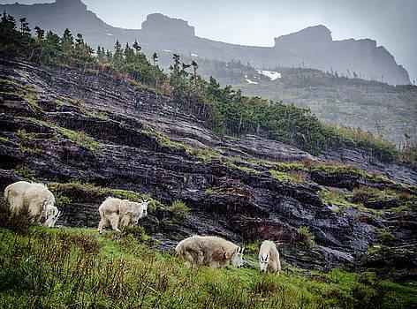 Mountain Goats in Rain by John MilitaryFire