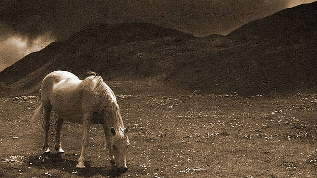 Mountain Horse by Jeff Larsen