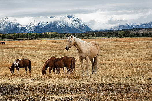 Mountain Horse - Horses in Grand Teton National Park by Sean Ramsey