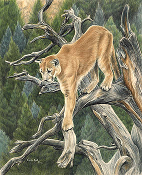Mountain Lion by Carla Kurt