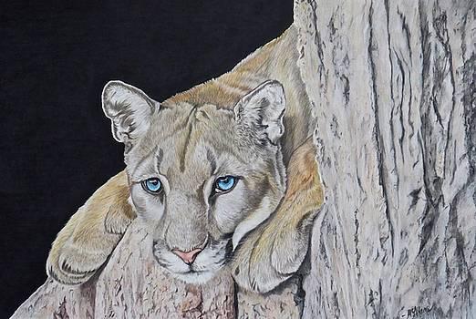 Mountain Lion by Michelle McAdams