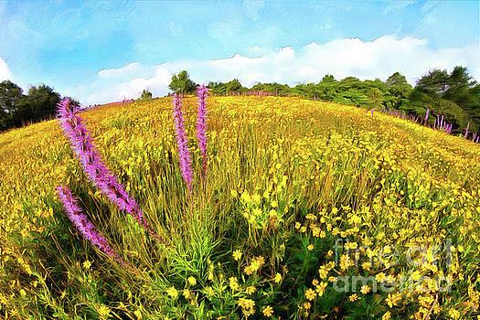 Mountain of Summer Flowers in the Blue Ridge AP by Dan Carmichael