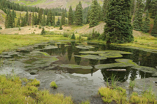 Mountain Pond by Jerry Mann