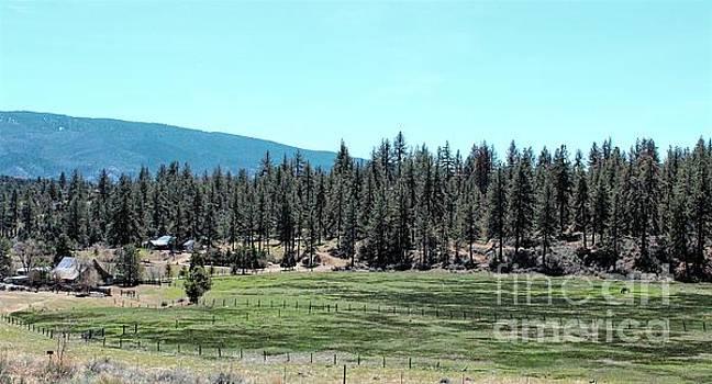 Jenny Revitz Soper - Mountain Ranch