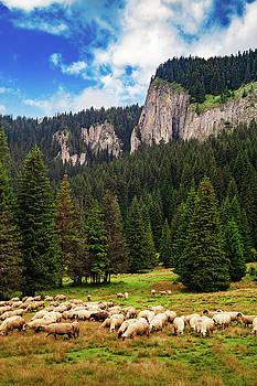 Mountain sheep by Chris Thodd
