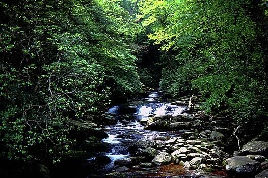 Gary Wonning - Mountain Stream