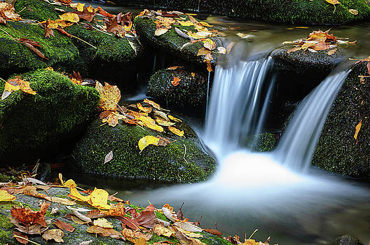 Mountain Stream in Autumn by Lance King
