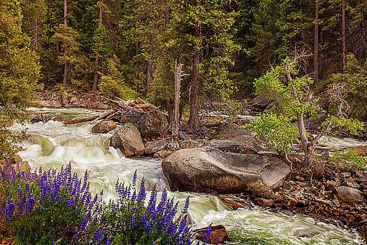 Mountain Stream in Spring by Andrew Soundarajan