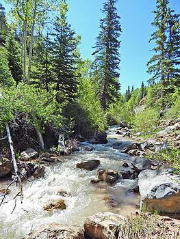 Mountain Stream by Jennifer Kelly