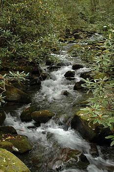 Mountain Stream by Kathy Schumann