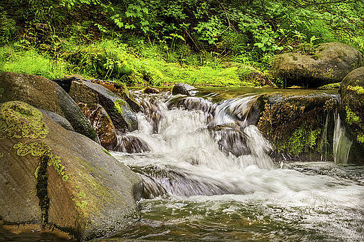 Mountain Stream by Ramona Murdock