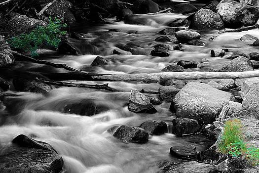 Mountain Stream by Steve ODonnell