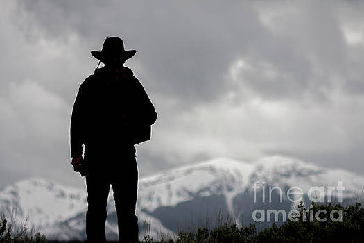 Yellowstone Cowboy by Thomas Levine