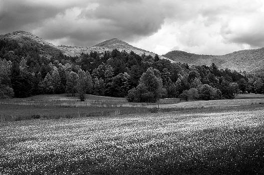 Mountain Wildflowers In Black and White by Greg Mimbs