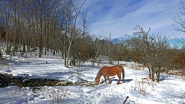 Mountain Winters by Patricia Keller