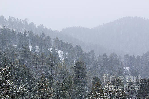 Steve Krull - Mountains of the Pike National Forest in Snow