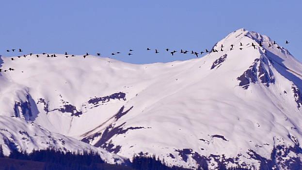Mountaintop Geese II by Larry Poulsen