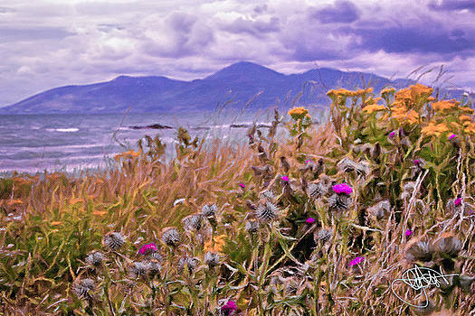 Mourne Thistles by Chris Hood