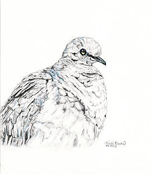 Mourning Dove by Heidi Kunkel