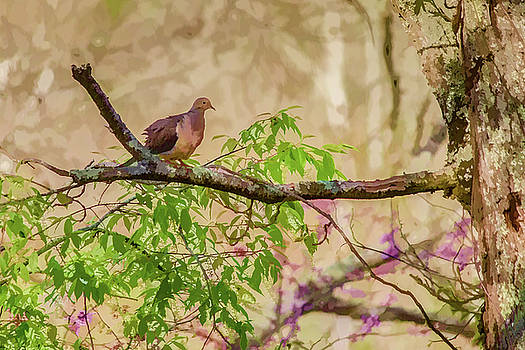 Lisa Lemmons-Powers - Mourning Dove on Branch