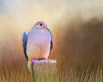 Mourning Dove Painted Portrait by Cathy Kovarik