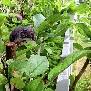 Mouse Sitting On Plant. #mouse #animal by Amanda Richter