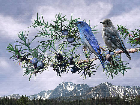 Moutain Bluebirds and Juniper by Matthew Schwartz