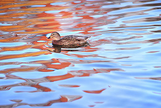 Jenny Rainbow - Moving Duck on the Picturesque Water