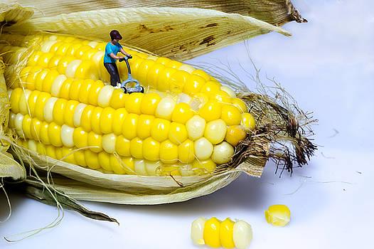 Mowing the Corn by Sandi Kroll