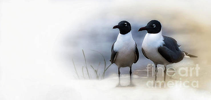 Mr and Mrs Laughing Gull by Mary Lou Chmura