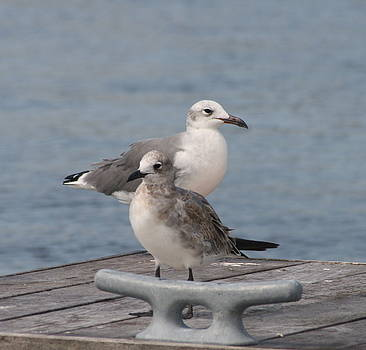 Bonnes Eyes Fine Art Photography - Mr. and Mrs Seagull
