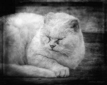 Mr Barn Cat Black and White Feline Tom Cat by Melissa Bittinger