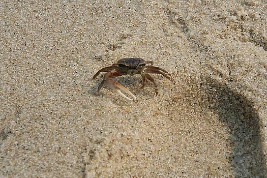 Mr Crab by Wendy Munandi