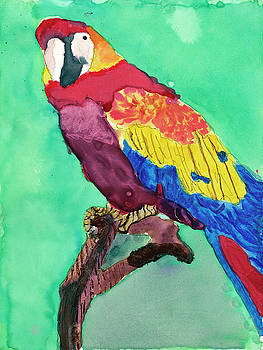 Mr. Macaw by Marbear