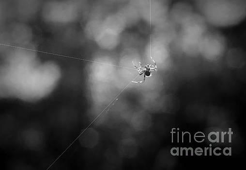 Dan Friend - Mr spider making his web