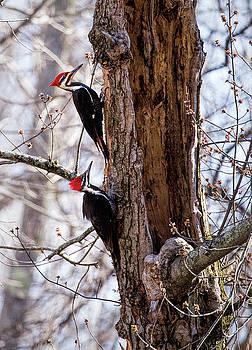 Mr.and Mrs. by James Figielski by Paulinskill River Photography