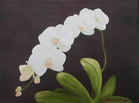 My Orchids by Dorothy Merritt