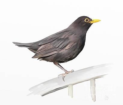 Ms. Blackbird is Brown by Ivana Westin