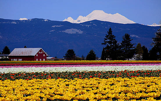 Mt. Baker at Skagit Valley M1038 by Mary Gaines